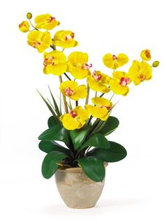 Special Offers - Double Stem Phalaenopsis Silk Orchid Arrangement - In stock & Free Shipping. You can save more money! Check It (April 11 2016 at 04:55PM) >> http://growlightusa.net/double-stem-phalaenopsis-silk-orchid-arrangement/