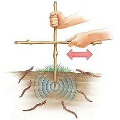 Good technique for finding bait: Find an area of loose, slightly moist soil (the dirt under a log or landscape timber works well) and push a 12- to 18-inch-long stick two to three inches into the ground. Vigorously rub another stick from side to side against it for about 2 minutes and watch as any worms in the vicinity wriggle to the surface. Try several areas in the yard to see which ones are the hottest worm hangouts.
