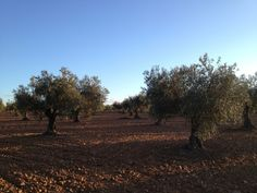 Beautiful picture of Extremadura!