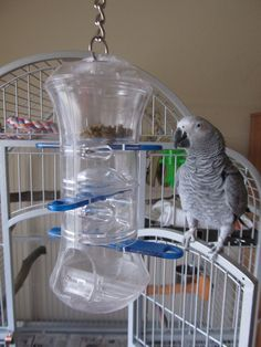 Normally I'm talking DIY parrot toys - but there are some store bought staples in Cricket's life. Visit http://www.tumblr.com/blog/mypamperedparrot to learn about this Cricket approved toy!