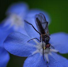 A jump into the nectar: Photo by Photographer Radu Carp