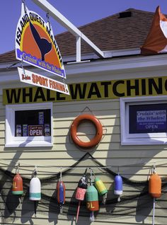 Many whale-watching trips depart from the quaint town of Saint Andrews on the Bay of Fundy in New Brunswick, Canada. Book one this summer to see these magnificent creatures. St Andrews, East Coast Canada, Pei Canada, All About Canada, New Brunswick Canada, Cruise Excursions, Atlantic Canada, Prince Edward Island, Whale Watching