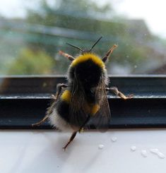 Bees: your Green shoots photographs - AWW - - Oh my gosh its a dancing bee! The post Bees: your Green shoots photographs appeared first on Gag Dad. Animals And Pets, Baby Animals, Funny Animals, Cute Animals, Beautiful Creatures, Animals Beautiful, Uk Bees, I Love Bees, Beautiful Bugs
