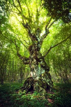 Magic Tree by Denis Belitsky on 500px