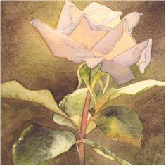Rose 6, watercolour by Amanda Spencer