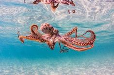 sea life - sea life photography - sea life underwater - sea life artwork - sea life watercolor sea l Underwater Creatures, Underwater Life, Beautiful Creatures, Animals Beautiful, Animals And Pets, Cute Animals, Fauna Marina, Deep Sea Creatures, Wale