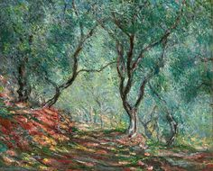 olive tree wood in the moreno garden - monet