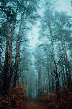 Atmospheric woods by Hendrik Mändla