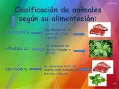 Clasificación de animales según su alimentación Science, Alonso, Food, Animals, Educational Crafts, Activities, Animal Classification, Vertebrates, Animales