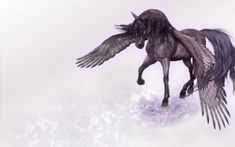 Full HD Wallpaper pegasus grey art wings from the category fantasy. Anime Wallpaper 1920x1080, Free Desktop Wallpaper, Desktop Backgrounds, Horse Wallpaper, Wallpaper Pictures, King Horse, A Kind Of Magic, Horse Artwork, Unicorn Art