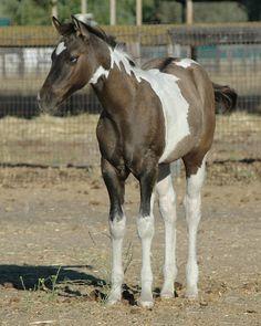 Home - Shining C Grulla Horses