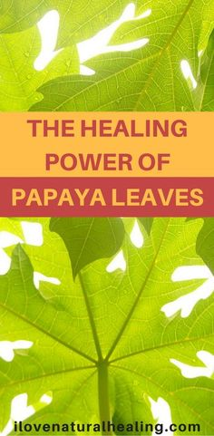 I don't think a lot of people know enough about this wonderful plant called Papaya.  Today I would love to share this awesome video created by Dr. Payl Haider. He explains the amazing healing quality of Papaya leaves. Papaya leaves offer so many great healing powers that I am left simply amazed by watching this video.