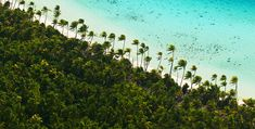 Tetiaroa Island - The Brando  - Explore the World with Travel Nerd Nici, one Country at a Time. http://TravelNerdNici.com