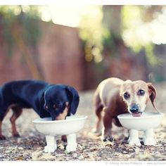 Love these #dachshunds with their footed bowls!