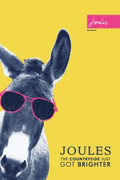 bad86e3b74 9 Best Joules Optical images