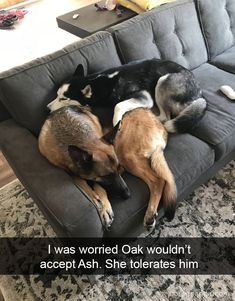 I Was Worried Oak Wouldn't Accept Ash. She Tolerates Him