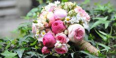 Bildergebnis für bernhard lakonig Summertime, Rose, Flowers, Plants, Wedding, Valentines Day Weddings, Pink, Plant, Roses