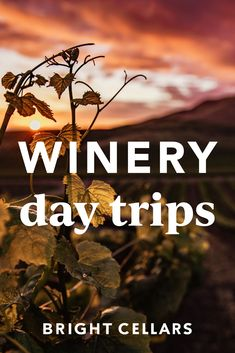 No matter where you are in the US there are some great long weekend fall wineries you HAVE to stop by! Check out these 12 fall winery day trips that you only have to drive to get to! No planes, just you and your favorite road trip people. Bright Cellars, Wine Guide, Wineries, Long Weekend, Wine Tasting, Day Trips, Planes, Need To Know, Road Trip