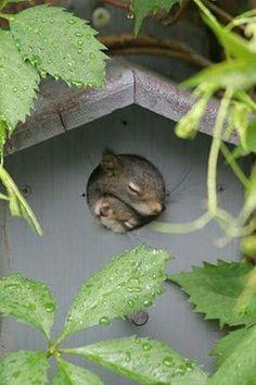 Squirrels in a birdhouse....