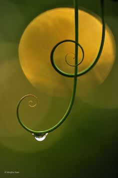 Natural Harmony, Minghui Yuan
