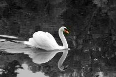 peaceful Peace, Bird, Photos, Animals, Pictures, Animales, Animaux, Birds, Animal