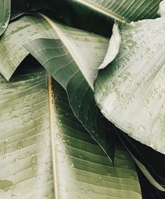 New Plants Photography Art Palm Trees 42 Ideas Cool Plants, Green Plants, Tropical Plants, Tropical Vibes, Tropical Leaves, Amazing Greens, Good Vibe, Plant Aesthetic, Nature Aesthetic