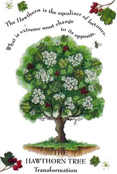 Hawthorn signs in Celtic tree astrology are not at all what they appear to be. Outwardly, they appear to be a certain persona, while on the inside Hawthorn's are quite different.