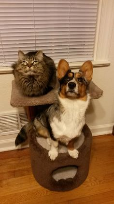 Cat tree??? I can do that!!!