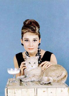 """Rare Audrey Hepburn — Audrey Hepburn and her furry costar, """"Cat"""", from..."""