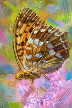 Bird Art / Butterfly Art - printed on STRETCHED CANVAS & embellished with clear matt texture to enhance the original digital brush strokes. DIGITAL BIRD ART Butterfly Photos, Butterfly Art, Abstract Photos, Abstract Art, Wall Art Prints, Fine Art Prints, Photo To Art, Art Prints Online, Dragonfly Art