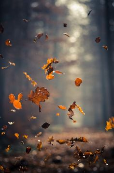 .different from others as they have sed the shutter speed to quickly take photo of the leaves falling
