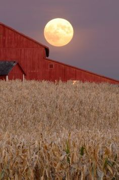 Beautiful Harvest moon rising over a barn on a cornfield outside Champaign… Moon Photos, Moon Pictures, Country Barns, Country Life, Country Living, Country Roads, Beautiful Moon, Beautiful Places, Stars Night