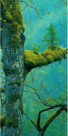 Wow. There is even a tree growing on the mossy branch!!!