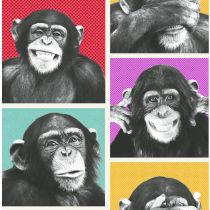 Cheeky Chimps Multicolor