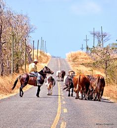 vaquero on a cattle drive, Costa Rica.  Photo: Gary Grossman, via Flickr