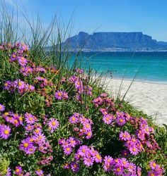 Just because I love my City. Table Mountain, Sunday Funday, Cape Town, Waves, Van, My Love, City, Beach, Flowers