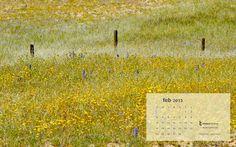 #February Desert Grasses #desktop #calendar  Free download, enjoy!