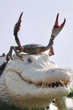 Crab riding an Albino Crocodile Fast Crazy Nature Deals. Nature Animals, Animals And Pets, Nature Nature, Beautiful Creatures, Animals Beautiful, Cute Baby Animals, Funny Animals, Crazy Animals, Tier Fotos