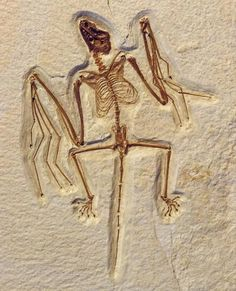 Primitive Early Eocene bat from Wyoming and the evolution of flight and…