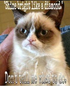 Mad cat @sara st. George