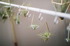 Air plants by Kelso Doesn't Dance.