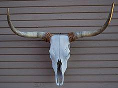 Longhorn Bull Skull