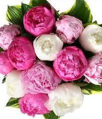 Peonis equal wild roses these are great flowers and they make the bouquet look really full, they also come in a variety of colours