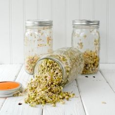 Homemade Sprouting Jars {tutorial} and 'Sprouting 101'.  A simple, quick and inexpensive way to grow sprouts and microgreens at home.