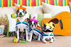 """Happy Cinco de Mayo from the Three Amigos! Howie says, """"I'm starting a mariachi band with three friends. We'll call ourselvesJuan Direction."""" MY OTHER RECIPES MY OTHER RECIPES Grumpiest little mariachi band ever! If you need an awesome recipes to celebrate today, here are some of my favorites! The Best Guacamole Recipe Salsa Verde Chicken …"""