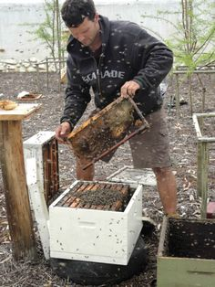 Bee hives in the stone fruit orchard at Babylonstoren help fertilize blossoming plum, apricot, peach and nectarine trees.
