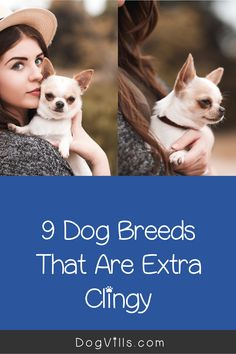 All dogs love to be near their human family, but there are some dog breeds that are extra clingy with their owners. Find out the top 9!