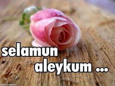 ☾✫ Good Morning Msg, Good Morning Images, Allah, Flowers, Twitter, Islamic, Google, Stickers, Quotes