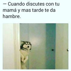 Really Funny Memes, Funny Relatable Memes, Funny Jokes, Triste Disney, Funny Spanish Memes, Girl Memes, New Memes, Animal Jokes, Funny Photos