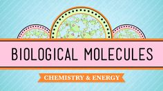 Biological Molecules – You Are What You Eat: Biology #3